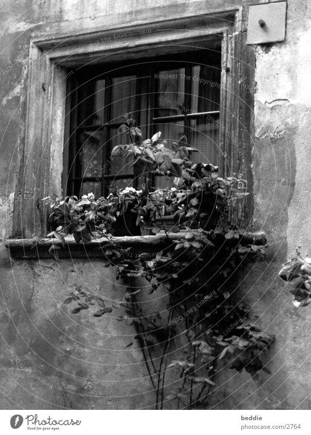 fenster1 Fenster Rose Elsass Architektur