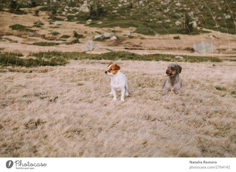 zwei Welpen liegen auf der Wiese und spielen weiter. Glück schön Spielen Menschengruppe Natur Tier Gras Park See Pelzmantel Haustier Hund sitzen natürlich
