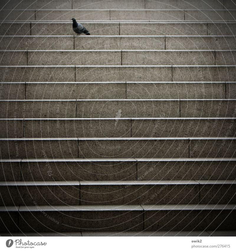 Zug verpasst Treppe Bahnhof Tier Vogel Taube 1 Stein stehen Traurigkeit warten Einsamkeit Farbfoto Gedeckte Farben Außenaufnahme Muster Menschenleer