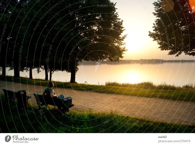 Abendschau Frau Erwachsene 1 Mensch Umwelt Natur Landschaft Pflanze Wasser Himmel Horizont Klima Wetter Schönes Wetter Baum Gras Seeufer beobachten entdecken