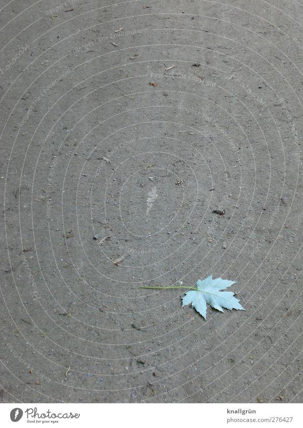 Herbstanfang Natur grün Pflanze Einsamkeit Blatt Gefühle Wege & Pfade grau Traurigkeit liegen Erde natürlich Urelemente Boden Wandel & Veränderung