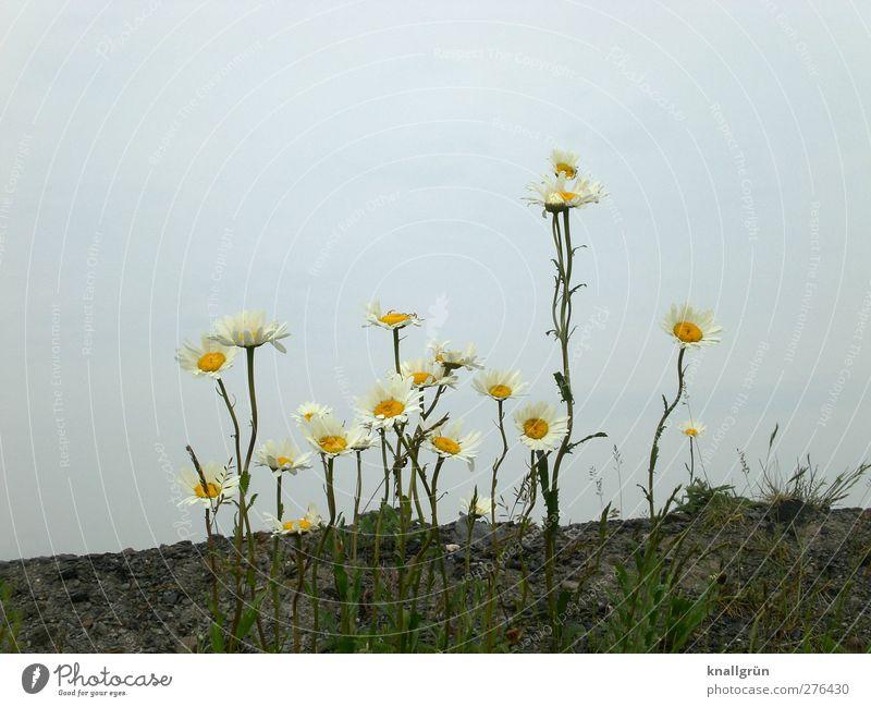 Auf Halde Himmel Natur blau weiß grün schön Sommer Pflanze Blume Landschaft gelb Umwelt Gefühle braun Erde natürlich