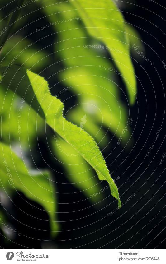 Grünflecken Natur grün Pflanze Blatt schwarz Umwelt Gefühle Garten Zufriedenheit ästhetisch einfach Sommerflieder