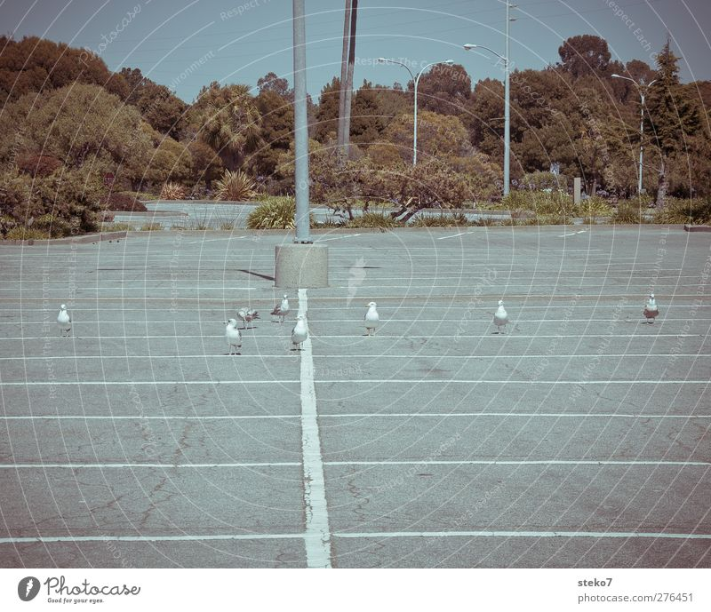 Startaufstellung blau Baum grau Vogel Linie warten stehen Tiergruppe Möwe Parkplatz