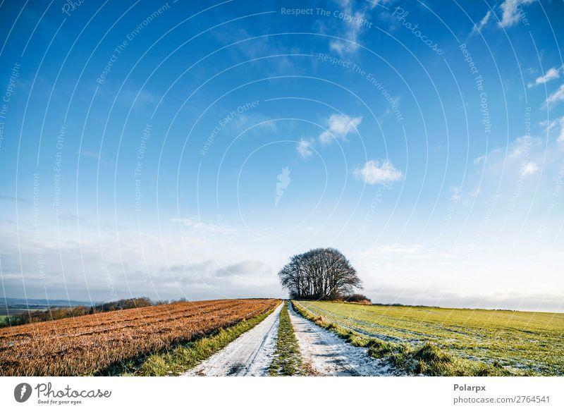 Schnee auf einer Landstraße mit bunten Feldern schön Ferien & Urlaub & Reisen Winter Umwelt Natur Landschaft Himmel Horizont Wetter Baum Gras Wiese Wald Verkehr