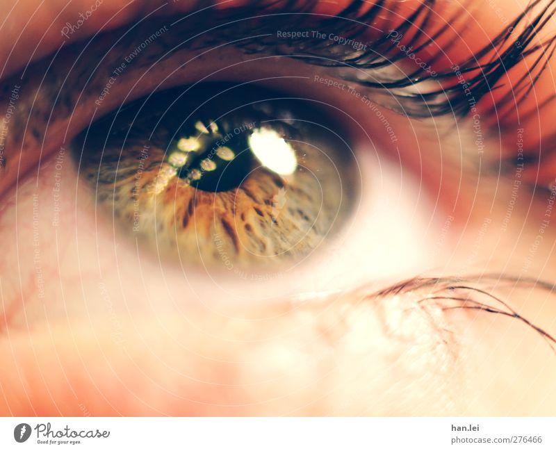 Auge schön Haut Gesicht Schminke Wimperntusche feminin Körper 1 Mensch beobachten Denken Blick bedrohlich authentisch orange rosa Vertrauen Mitgefühl Sehnsucht