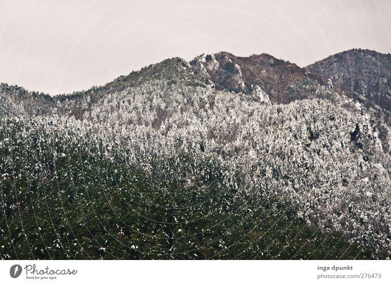 Schneegrenze Umwelt Natur Landschaft Winter Klima Wetter schlechtes Wetter Pflanze Baum Wald Berge u. Gebirge Gipfel Schneebedeckte Gipfel China Yunnan Himalaya