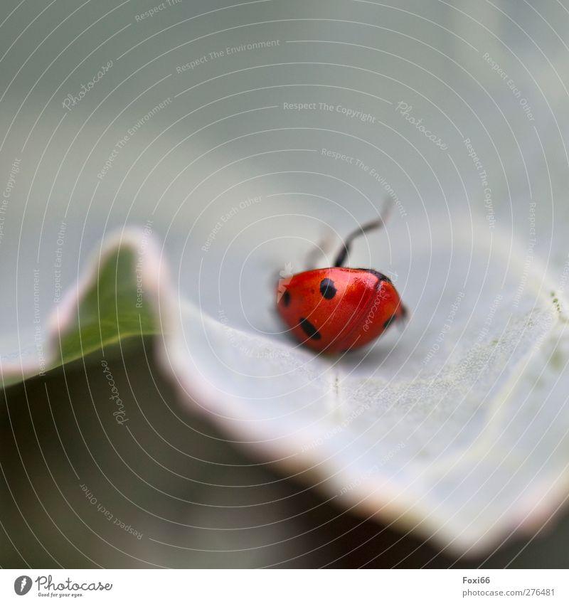 Außer Balance Natur blau grün Sommer rot Tier Blatt Wiese Bewegung Glück lustig natürlich Wildtier Erfolg Flügel niedlich