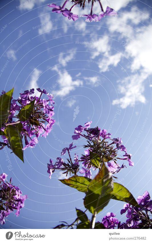 Blümchen Himmel Natur blau grün schön Sommer Pflanze Blume Blatt Wolken Umwelt Blüte Garten Park frisch Perspektive
