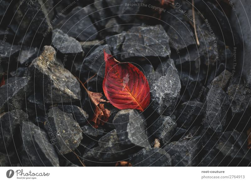 Herbstblatt zwischen Steinen Umwelt Natur Pflanze Erde Blatt Garten Park Wald Müdigkeit Schmerz Einsamkeit Ende Verfall Vergangenheit Vergänglichkeit verlieren