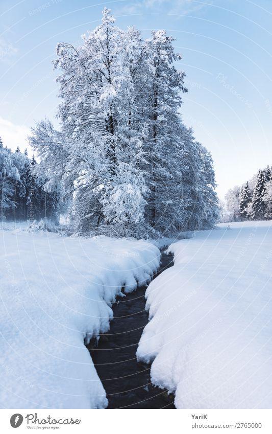 winter creek Natur Landschaft Himmel Winter Klima Klimawandel Wetter Eis Frost Schnee Baum Feld Wald kalt Bach Schneedecke blau weiß Bayern Deutschland