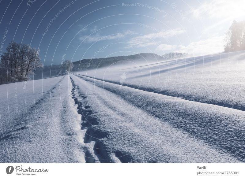 winter tracks Natur Landschaft Himmel Winter Klima Klimawandel Schönes Wetter Eis Frost Schnee Feld Wald kalt Spuren Fußspur Schneedecke Bayern Deutschland