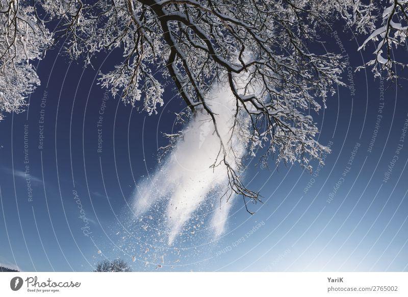 winter break Natur Himmel Winter Klima Klimawandel Schönes Wetter Eis Frost Schnee Schneefall Baum fallen Ast brechen blau Blauer Himmel Schneeflocke