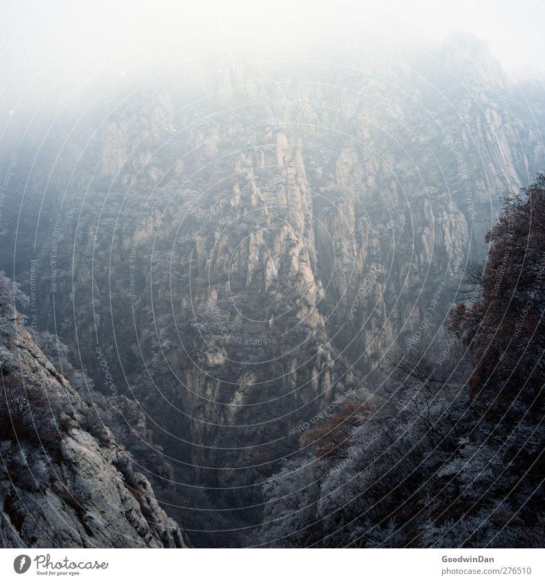 Into the wilderness. Natur Baum Ferne Umwelt kalt Berge u. Gebirge Eis Stimmung Wetter Klima Frost Schönes Wetter Gipfel fantastisch Klimawandel