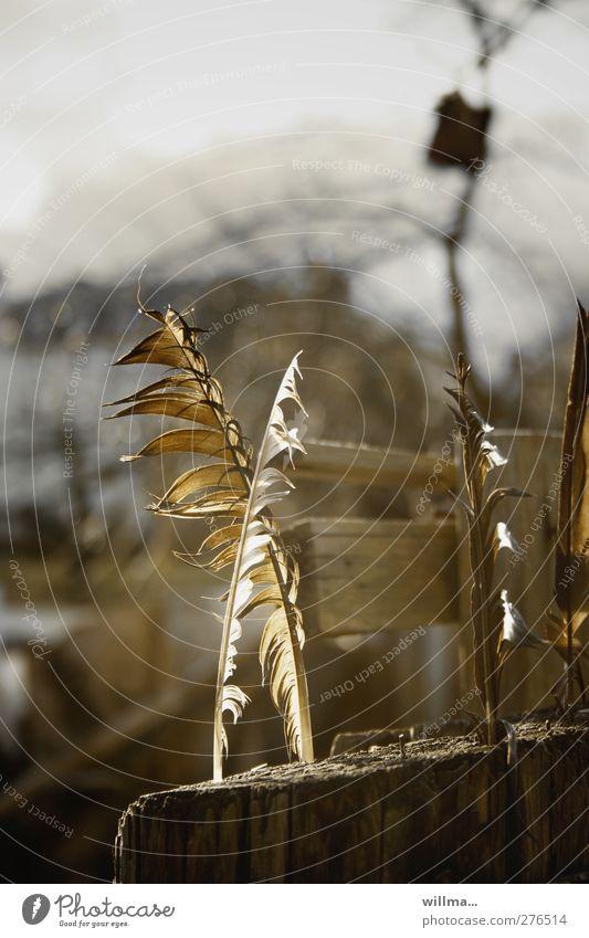 federklingenfreundschaft Feder Holz braun Plumologie Mythologie Gartenzaun Bretterzaun morsch Nistkasten träumen Schutz Defensive Zauberei u. Magie gekreuzt