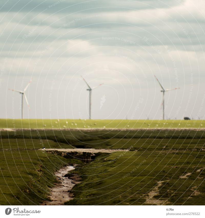 die drei Wächter des Windes blau grün Sommer Landschaft Frühling Bewegung Küste grau natürlich Tourismus Zukunft Windkraftanlage Schaf nachhaltig Wattenmeer