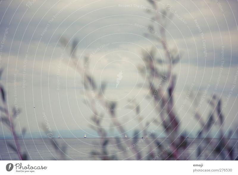 Konstanz Umwelt Natur Wasser Himmel Wolken schlechtes Wetter Pflanze Sträucher See blau Horizont Bodensee Farbfoto Gedeckte Farben Außenaufnahme Menschenleer