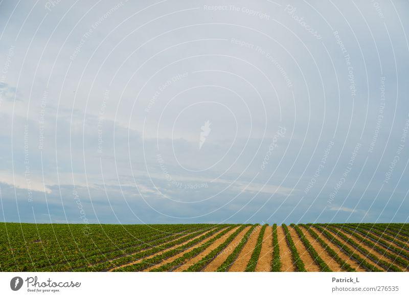 Flucht Landschaft Pflanze Nutzpflanze lang Himmel (Jenseits) Ackerbau Ackerboden Fluchtlinie Konzentration horizontal führen Strukturen & Formen grün blau gelb