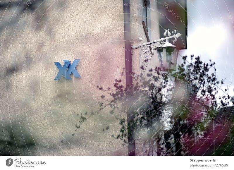 Nummer 20 blau weiß Haus Wand Mauer Garten Stil Fassade Dekoration & Verzierung Sträucher Idylle einzigartig Idee violett Dorf stagnierend