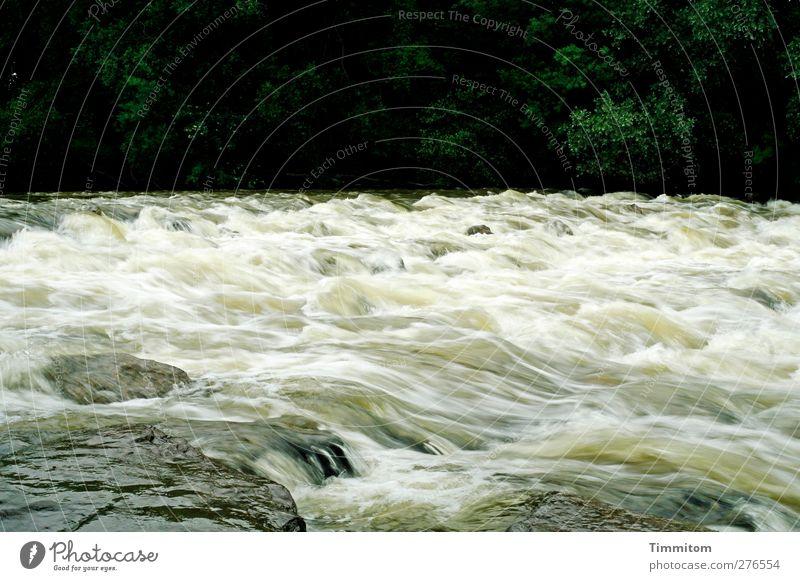 Grünwasser Ferien & Urlaub & Reisen Umwelt Natur Pflanze Wasser Fluss Stein frisch natürlich Geschwindigkeit grün schwarz weiß Gefühle Bewegung Bodensee Argen