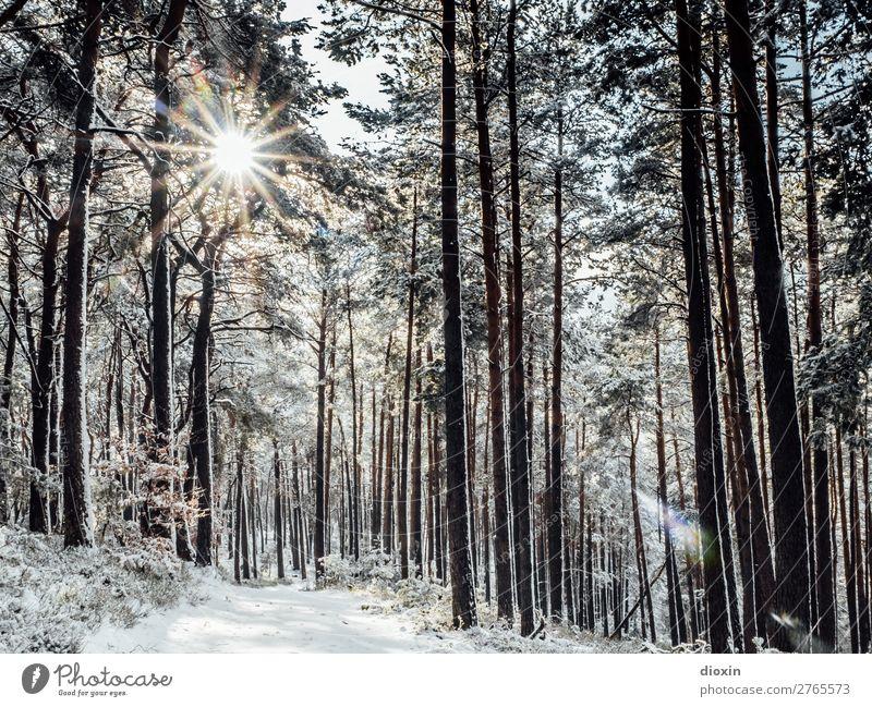 angenehm temperiert Ferien & Urlaub & Reisen Tourismus Ausflug Winter Schnee Winterurlaub wandern Bar Cocktailbar Umwelt Natur Landschaft Pflanze Sonne