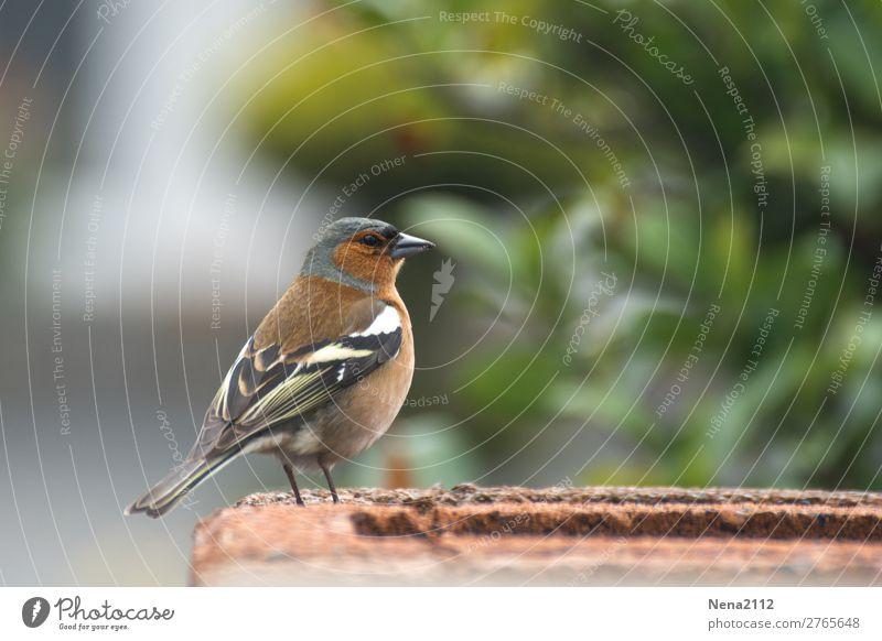 Spatz Umwelt Natur Tier Luft Garten Wildtier Vogel Flügel 1 klein singen Freiheit Vogelfutter Stadtbewohner Nest Farbfoto Außenaufnahme Nahaufnahme Menschenleer