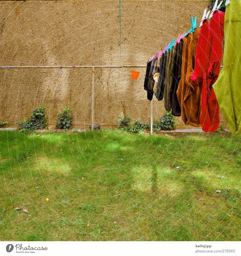 gewäsch Häusliches Leben Wohnung Haus Garten Wiese Mode Strümpfe hängen Wäsche Wäscheleine Haushalt Wäscheklammern trocknen Sauberkeit Ordnung Eimer Hinterhof