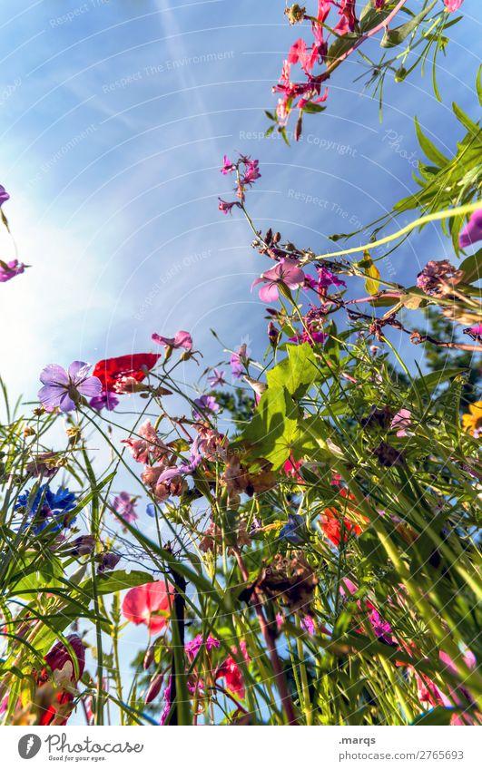 Wildblumen Umwelt Natur Pflanze Wolkenloser Himmel Sommer Blume Wildpflanze Wiesenblume Blühend schön Stimmung nachhaltig Farbfoto mehrfarbig Außenaufnahme