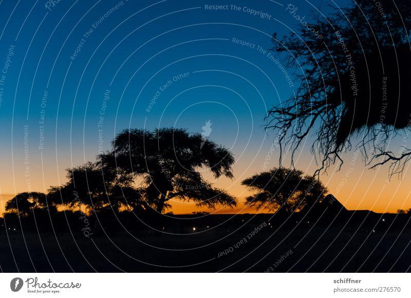 Jetzt schnell zurück, bevor der Jaguar kommt... Umwelt Natur Landschaft Nachthimmel Horizont Sonnenaufgang Sonnenuntergang Schönes Wetter Pflanze Baum Wüste