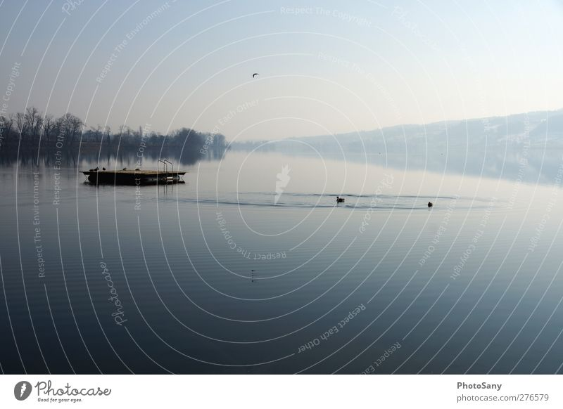 unser see Himmel Natur Wasser Umwelt See Luft Vogel Wildtier genießen