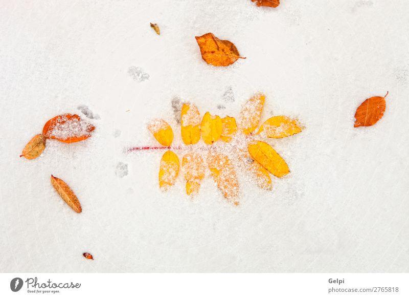 Gelbe Blätter auf einer Schneedecke schön Winter Natur Pflanze Herbst Wetter Baum Blatt alt Coolness hell braun rot weiß Tod Farbe Schneeflocke Gelbhintergründe
