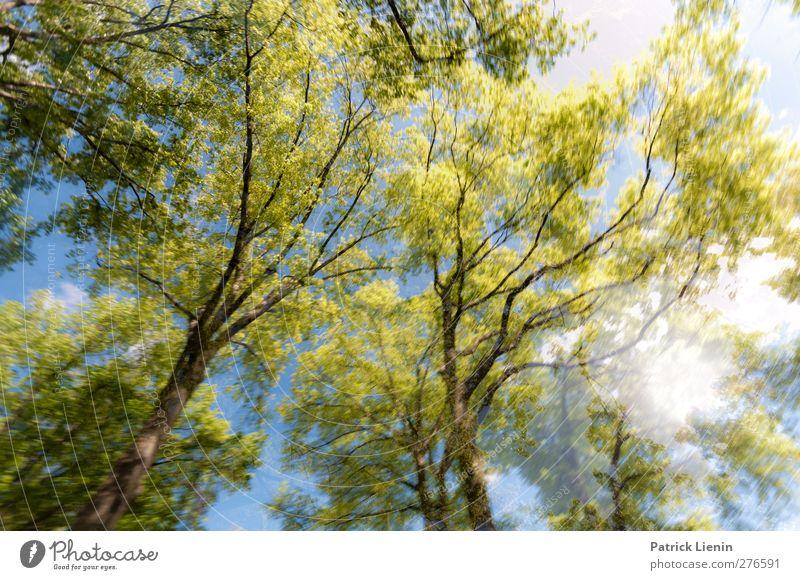 Fly Natur Baum Sommer Pflanze Wald Umwelt Frühling Freiheit Luft Wetter Zufriedenheit Beginn ästhetisch Urelemente Schönes Wetter einzigartig