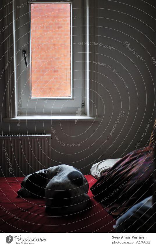 kleines fenster. Hund Tier ruhig Fenster liegen schlafen Bettwäsche Haustier Kissen Schlafzimmer Siesta Boxer Haushund