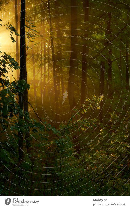 Morgensonne Natur grün Baum Pflanze ruhig Wald Wärme orange Schönes Wetter Frieden feucht Auwald