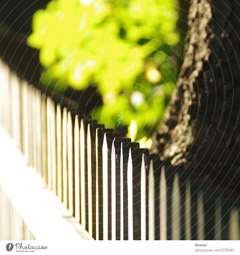 Sommerlicht Natur Pflanze Schönes Wetter Baum Blatt Grünpflanze Garten Menschenleer Gartenzaun Holzzaun Zaun Zaunpfahl glänzend leuchten frisch positiv braun