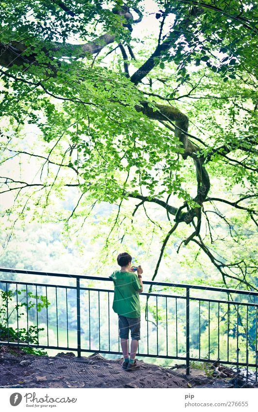 nachwuchsfotograf Mensch maskulin Junge Rücken 1 8-13 Jahre Kind Kindheit Natur Schönes Wetter Baum Ast Zweige u. Äste Blatt Wald Felsen Geländer beobachten