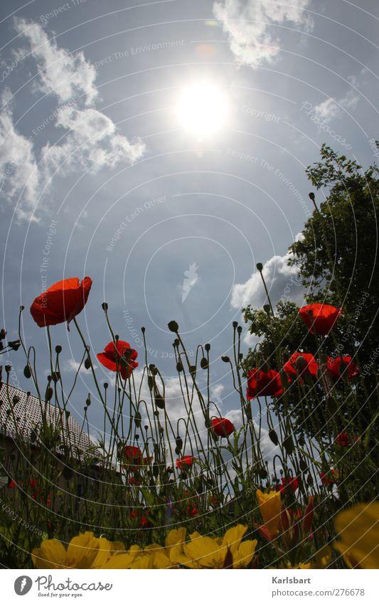schm. Ausflug Sommer Sonne wandern Haus Garten Landwirtschaft Forstwirtschaft Natur Landschaft Pflanze Luft Himmel Wolken Sonnenlicht Schönes Wetter Baum Blume