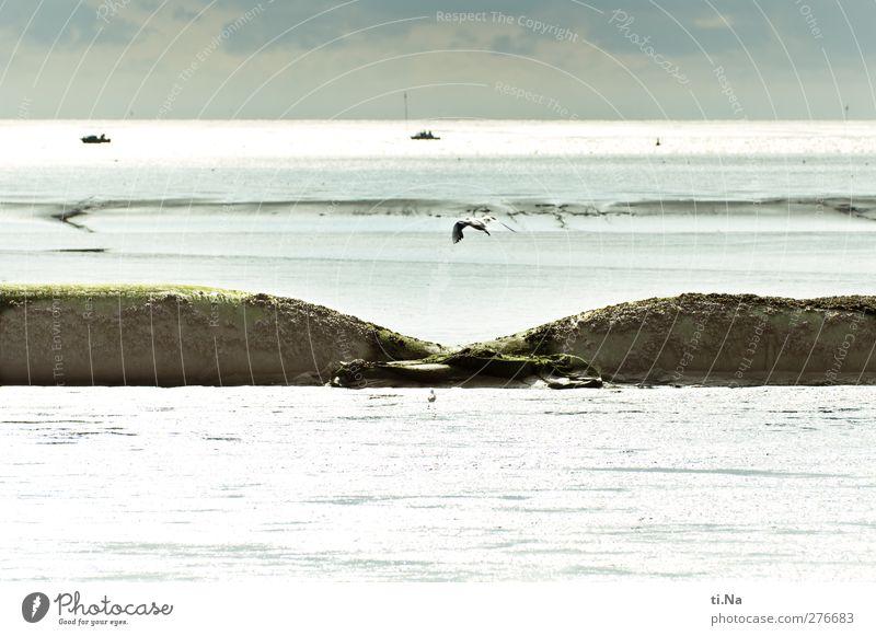 Wattwürste Natur Landschaft Himmel Wolken Gewitterwolken Sommer Schönes Wetter Hügel Küste Bucht Nordsee Wattenmeer Wildtier Vogel Möwe fangen fliegen laufen
