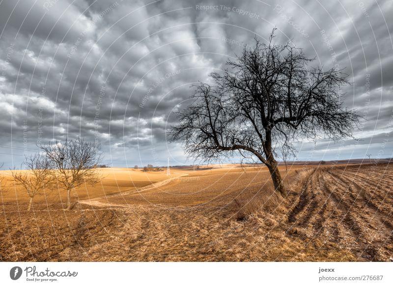 Wenn der Wind weht Baum Wolken ruhig schwarz Landschaft Umwelt Herbst grau Horizont braun Feld trist Schönes Wetter Idylle