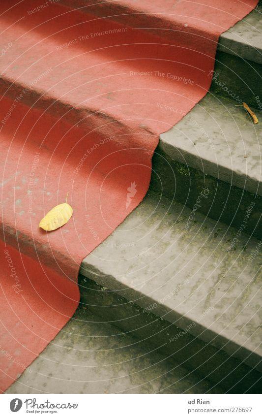stairway to anywhere Treppe Wege & Pfade gebrauchen steigen Teppich Blatt Herbst abgelaufen alt Roter Teppich Farbfoto Menschenleer Vogelperspektive
