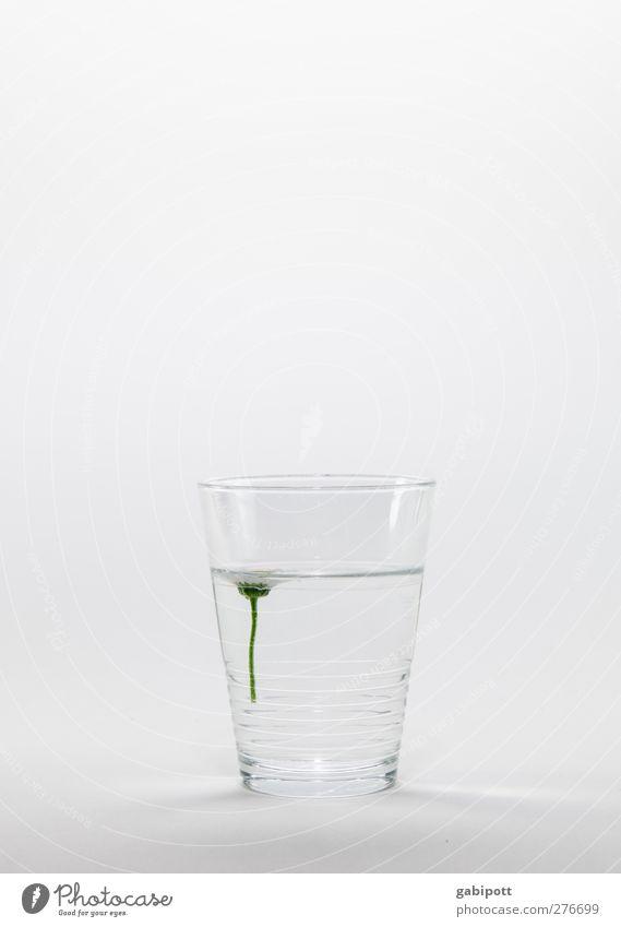 Gänse(blumen)wein Getränk trinken Erfrischungsgetränk Trinkwasser Geschirr Glas Pflanze Blume Gesundheit Sauberkeit weiß achtsam Selbstbeherrschung Reinlichkeit