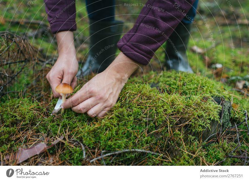 Getreidefrau beim Abschneiden von Pilzen Frau Sammeln Messer geschnitten Tourismus natürlich Umwelt Jahreszeiten Pflanze Gesundheit Herbst abholen frisch Wald