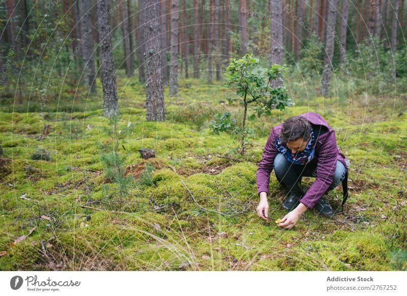 Mann schneidet Pilze ab Sammeln Messer geschnitten Tourismus natürlich Umwelt Jahreszeiten Pflanze Gesundheit Herbst abholen frisch Wald Moos pflücken Erholung