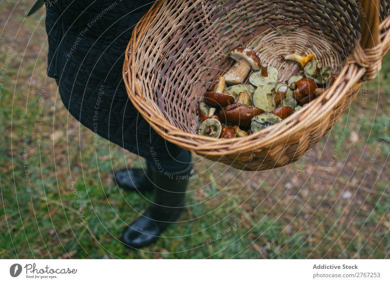 Getreideperson, die den Eimer voller Pilze hält. Korb pflücken Jahreszeiten Wald natürlich Sommer Gesundheit frisch Lebensmittel Herbst Weide Natur braun
