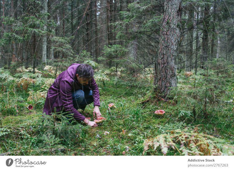 Mann sammelt Pilze im Wald Kommissionierung Erholung Sammeln Tourismus natürlich Jahreszeiten Gesundheit Herbst abholen frisch Moos kalt pflücken essbar Gras