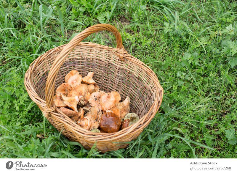 Weidenkorb voller verschiedener Pilze Korb pflücken Jahreszeiten Sortiment Wald Ernte natürlich essbar Sommer Gesundheit frisch Lebensmittel Herbst Natur braun