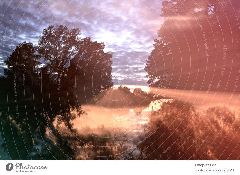 Seeufer der Müritz Kunst Umwelt Natur Landschaft Pflanze Wasser Himmel Wolken Sonne Sonnenaufgang Sonnenuntergang Sonnenlicht Sommer Wetter Schönes Wetter Baum