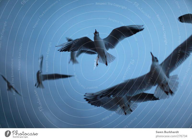 MEEEEHR FISCHHH !!!! Himmel Natur blau Sommer Tier Wolken Ferne Umwelt grau Luft Vogel fliegen Wildtier Tiergruppe Flügel Schönes Wetter