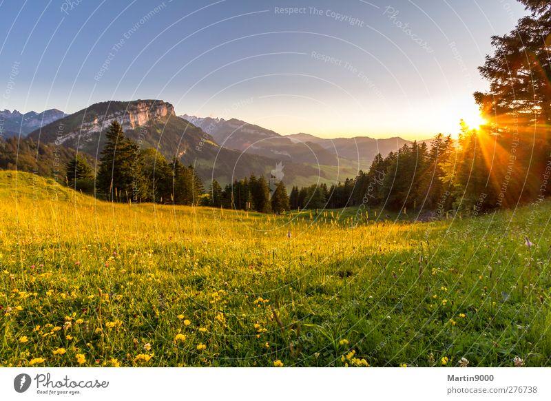 Abendruhe auf der Alp Himmel Natur Ferien & Urlaub & Reisen Pflanze Sommer Sonne Erholung Landschaft Berge u. Gebirge Umwelt Gesundheit Gesundheitswesen