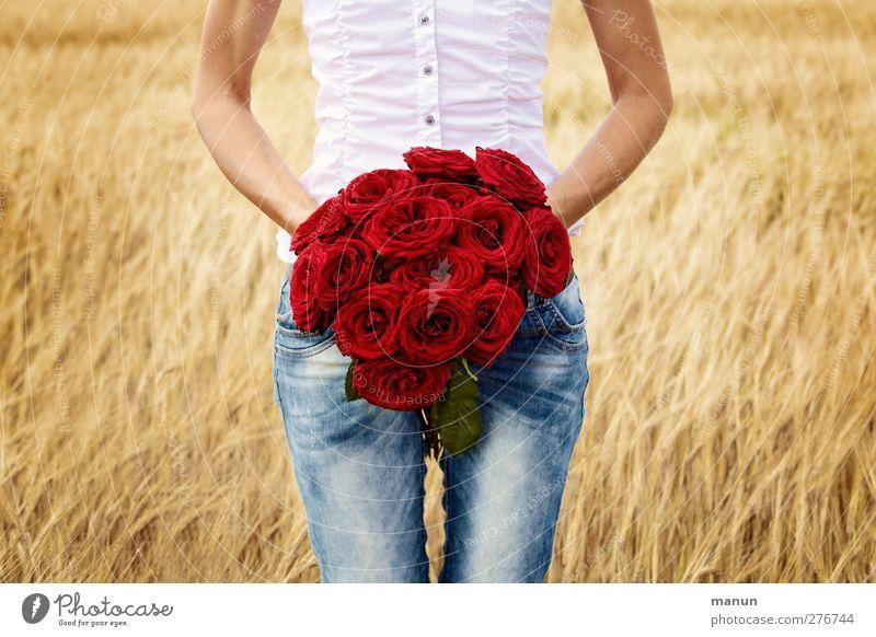 Rote Rosen Mensch Frau Sommer rot Erwachsene Liebe feminin Leben Gefühle Glück Feste & Feiern Körper Feld gold Arme Geburtstag